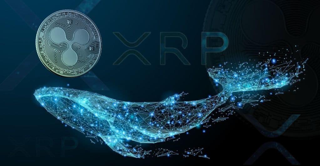 Trotz SEC-Klage, Ripple berichtet starke XRP Wal Akkumulation